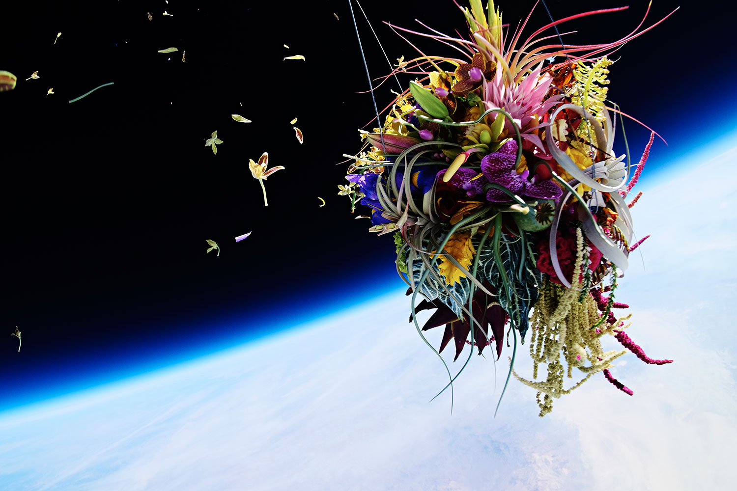 6 Impressive Projects That Turn Botany Into Art 2