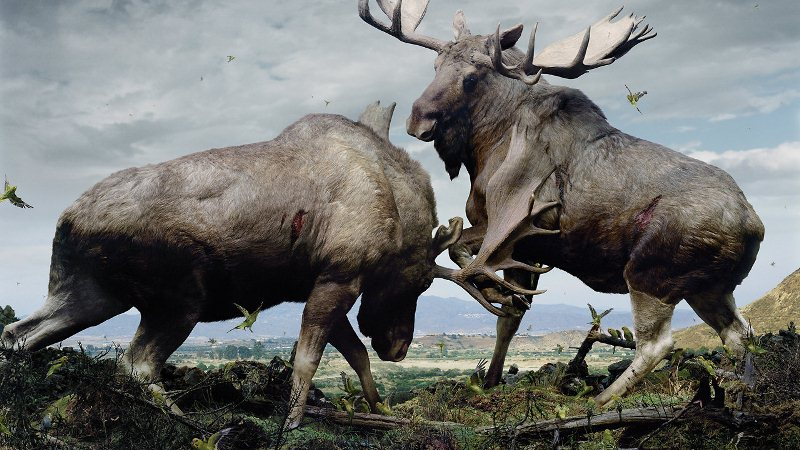 Apocalyptic Animal Kingdom Of Simen Johan