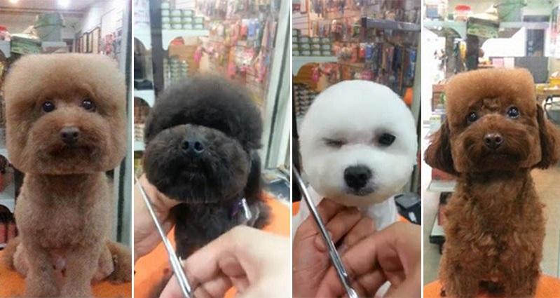 Asian Dog Grooming Magazine