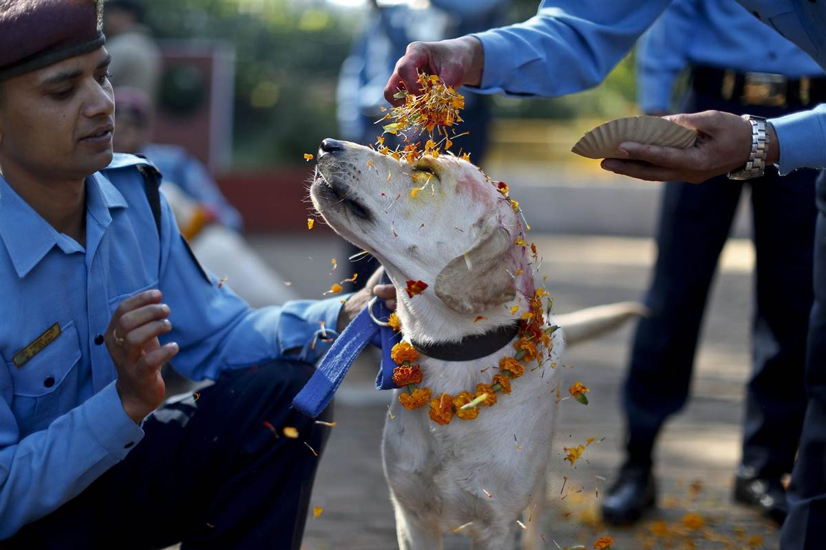 Nepal's Festival To Celebrate Dogs 4