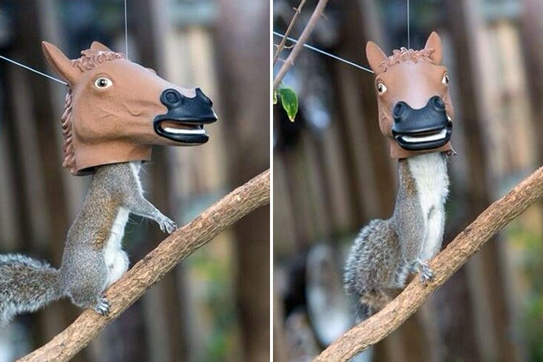 15) Freakishly looking squirrel feeder
