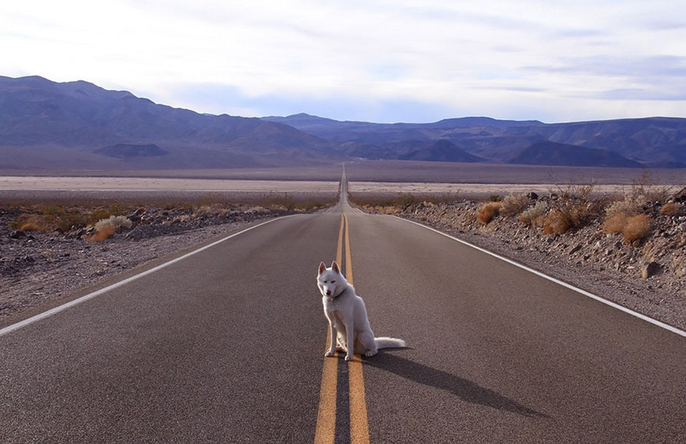 Alone With 53 Thousand Followers- Incredible Adventures Of John Stortz And His Dog 1