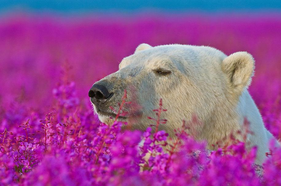 The Cutest Polar Bear You've Ever Seen! Boom! 1