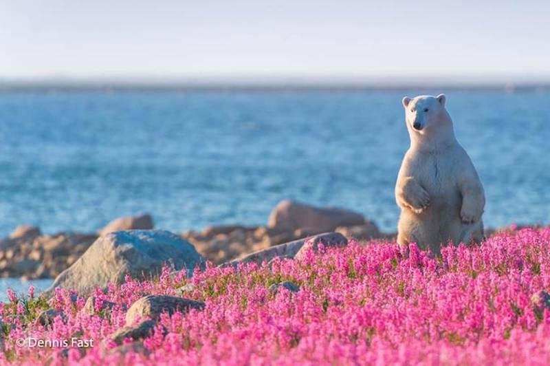 The Cutest Polar Bear You've Ever Seen! Boom! 10