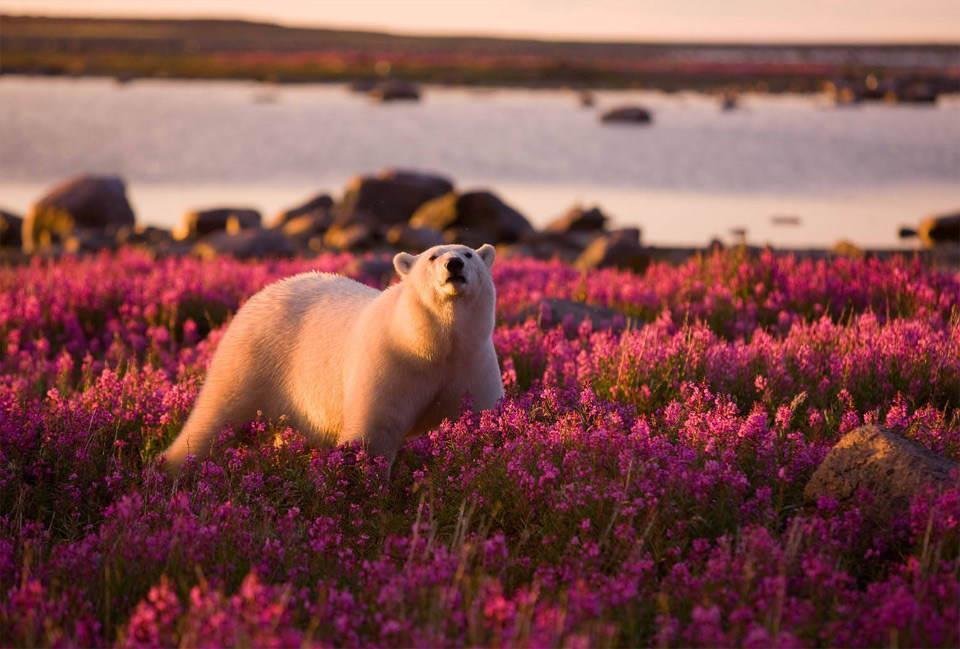 The Cutest Polar Bear You've Ever Seen! Boom! 5
