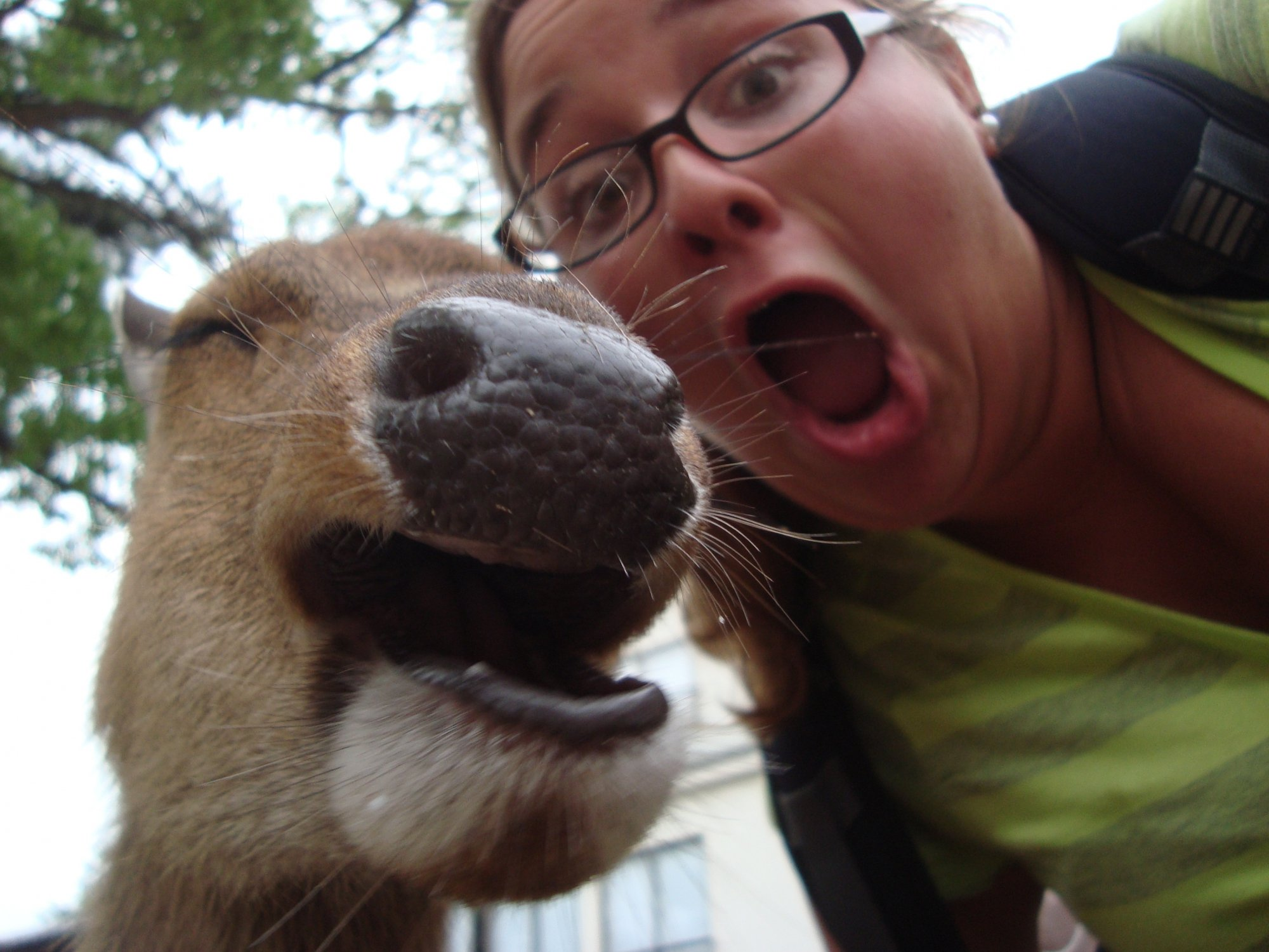 Snapping Selfies with Wild Animals Is a New Trend 3