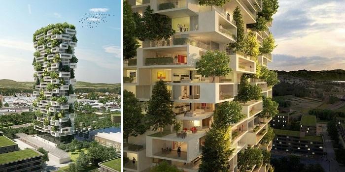 cedar_trees_tower_01