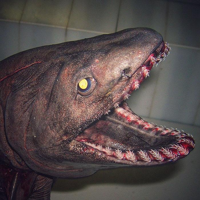 deep-sea-creatures-roman-fedorstov- (11)