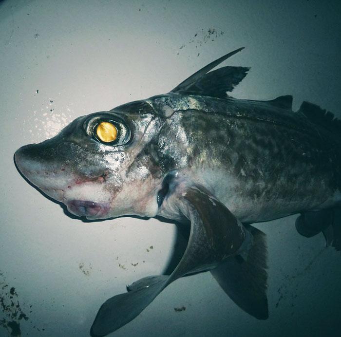 deep-sea-creatures-roman-fedorstov- (12)