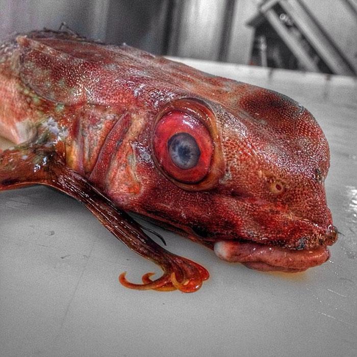 deep-sea-creatures-roman-fedorstov- (15)