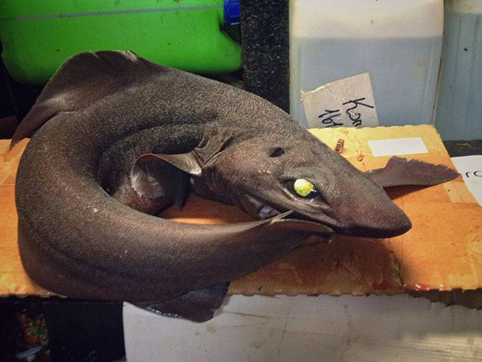 deep-sea-creatures-roman-fedorstov- (23)