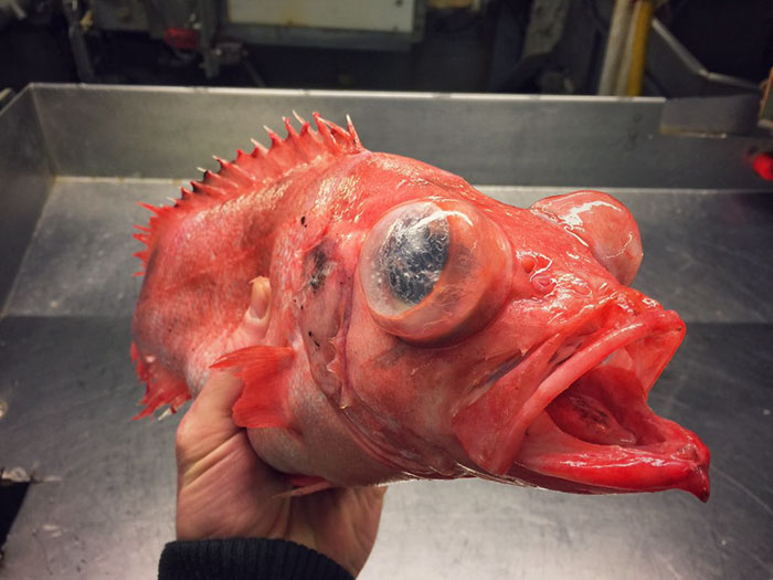 deep-sea-creatures-roman-fedorstov- (29)