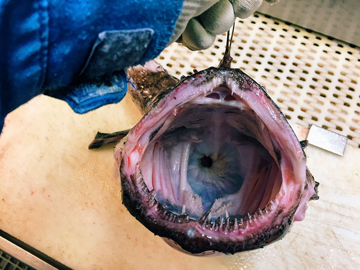 deep-sea-creatures-roman-fedorstov- (30)