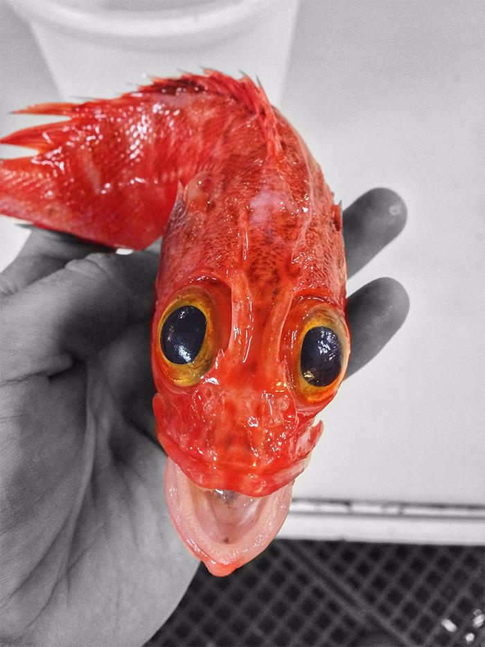 deep-sea-creatures-roman-fedorstov- (35)