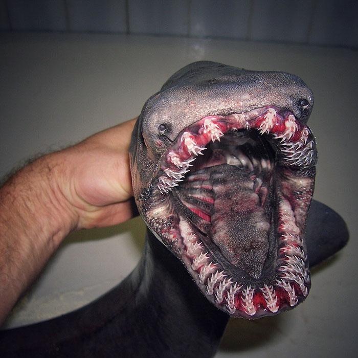 deep-sea-creatures-roman-fedorstov- (38)