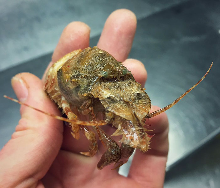 deep-sea-creatures-roman-fedorstov- (7)