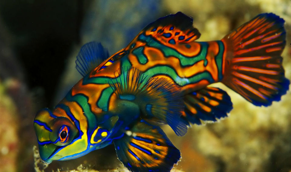 The Top 11 Most Beautiful Animals In The World