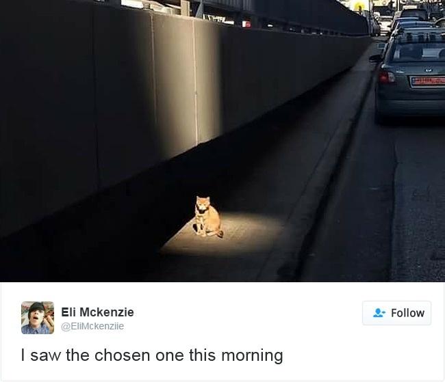 cats-twitter-memes-2016-10