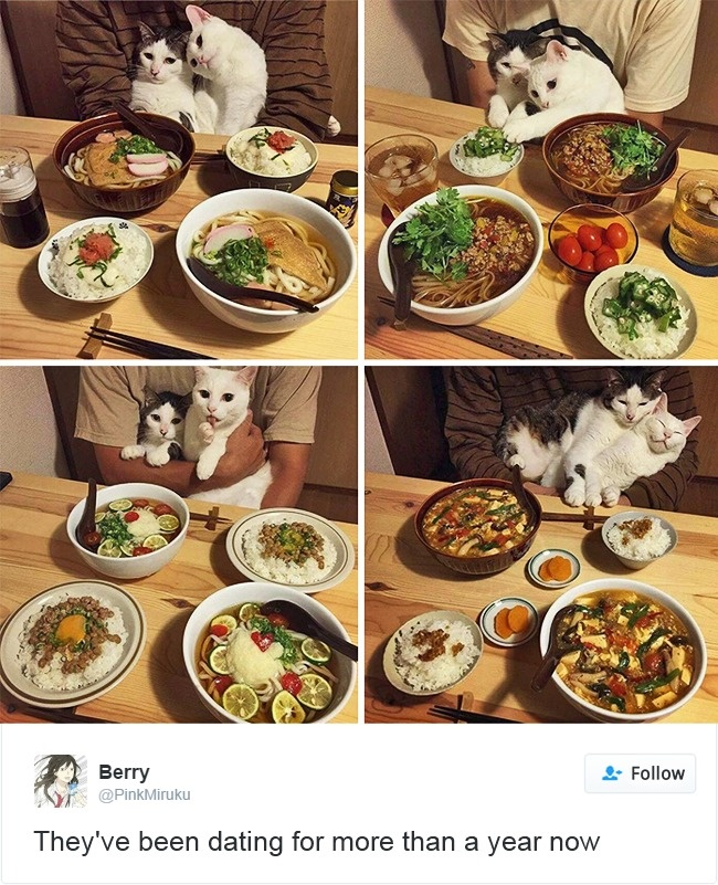 cats-twitter-memes-2016-13