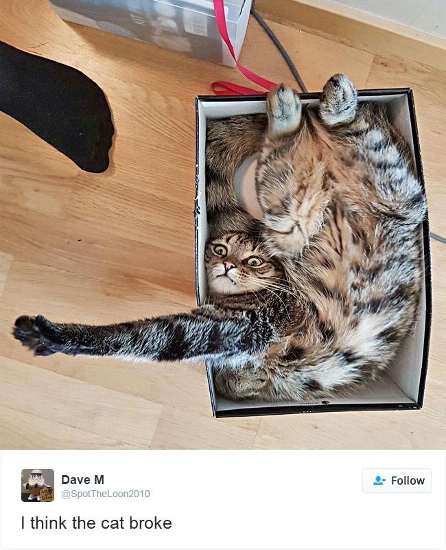 cats-twitter-memes-2016-14