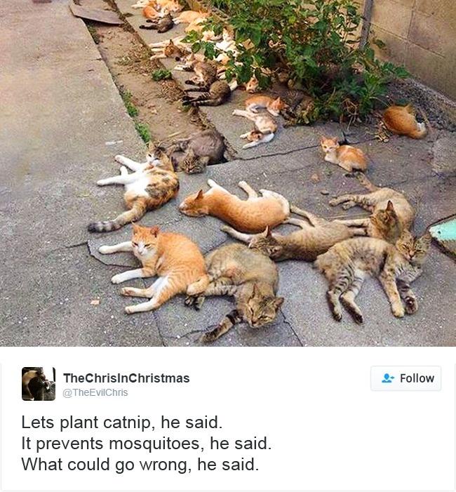 cats-twitter-memes-2016-15