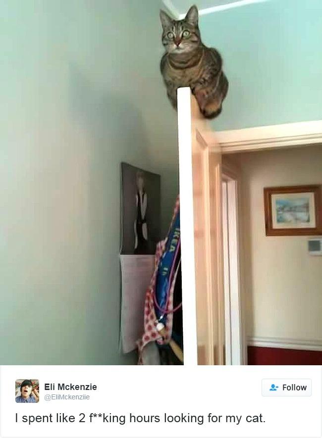 cats-twitter-memes-2016-16