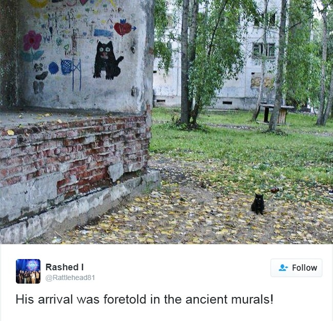 cats-twitter-memes-2016-18