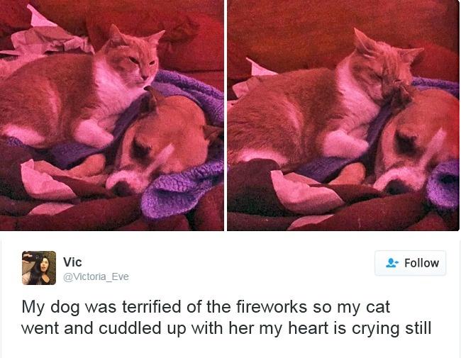 cats-twitter-memes-2016-19