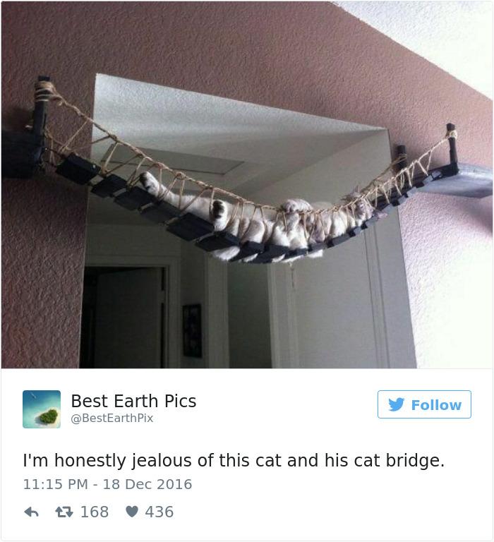 cats-twitter-memes-2016-20