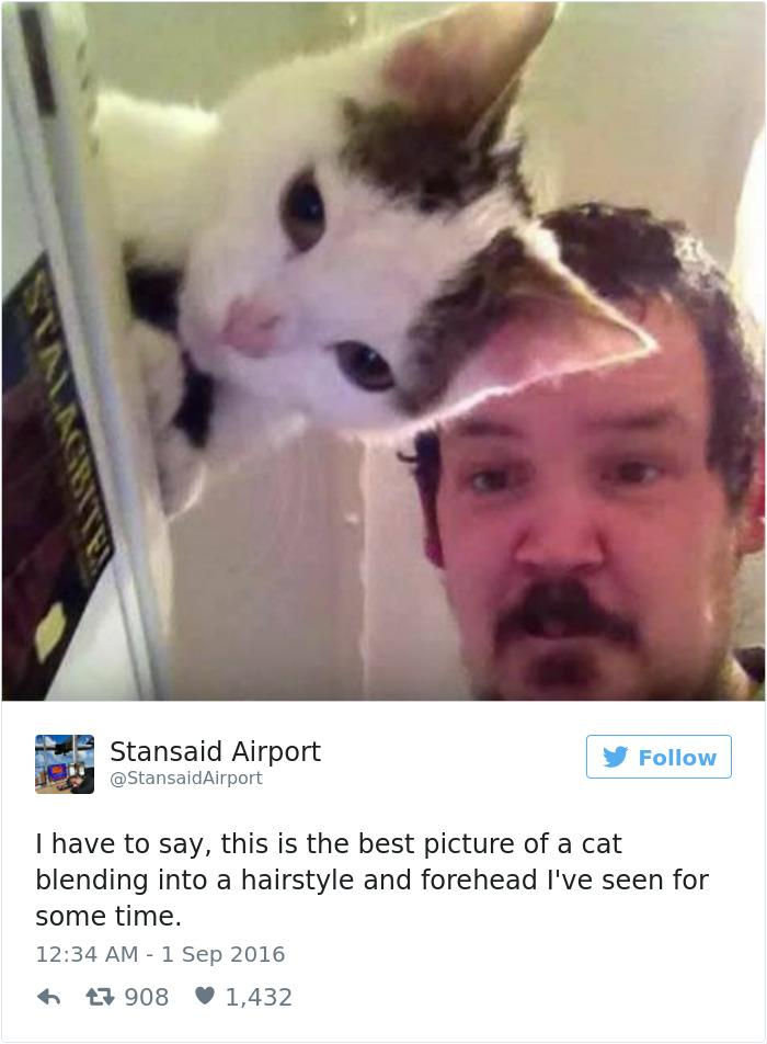 cats-twitter-memes-2016-21