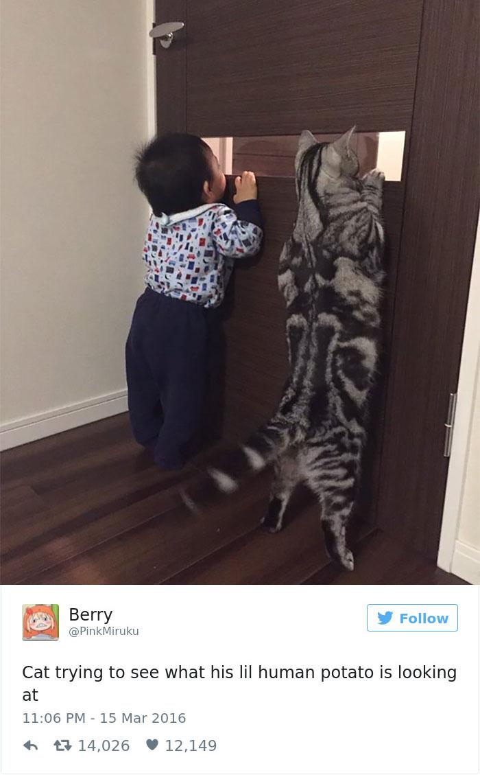 cats-twitter-memes-2016-24
