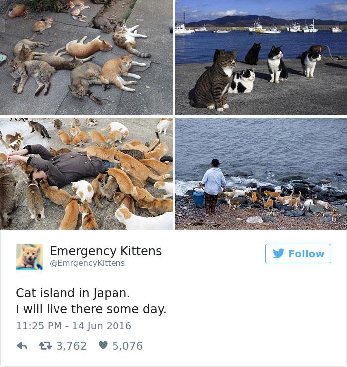 cats-twitter-memes-2016-27