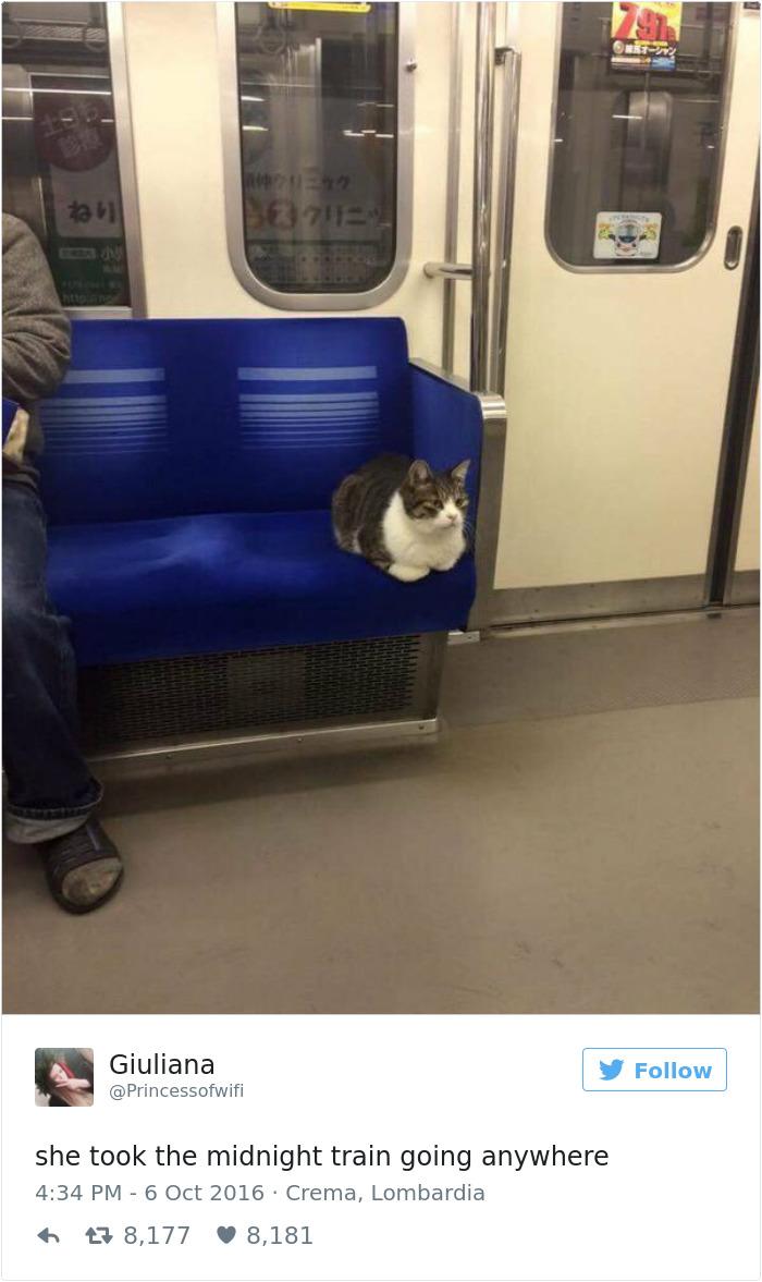 cats-twitter-memes-2016-3