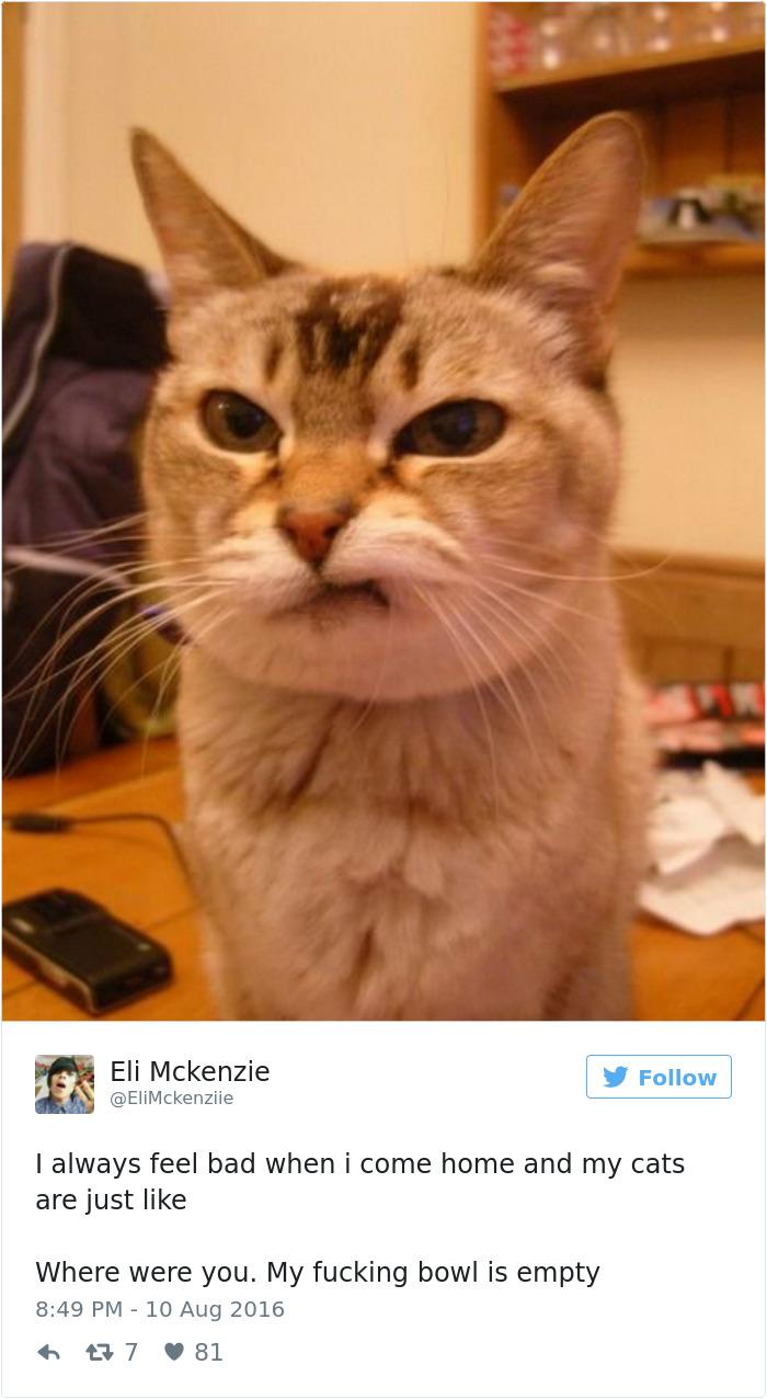 cats-twitter-memes-2016-30