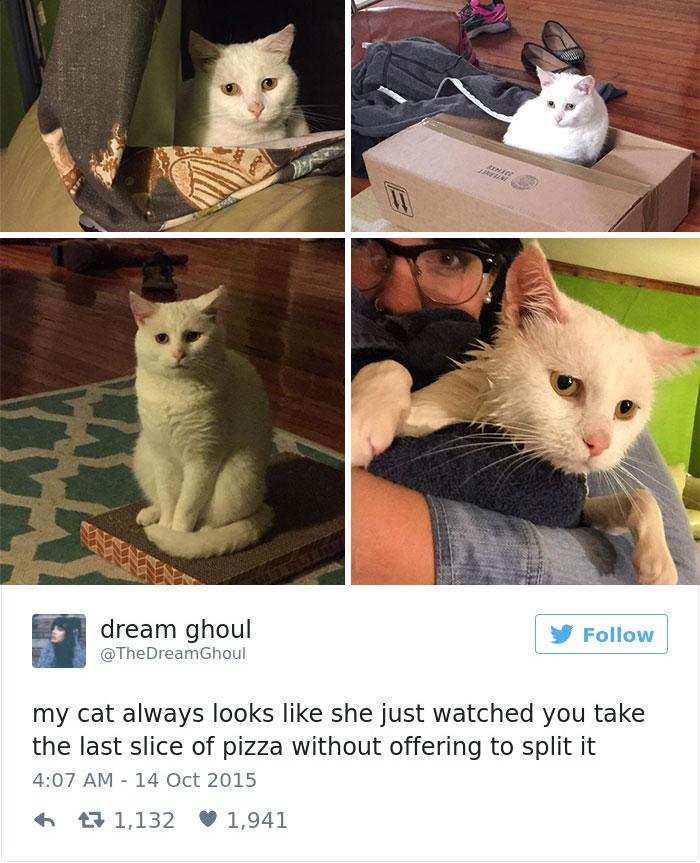 cats-twitter-memes-2016-31
