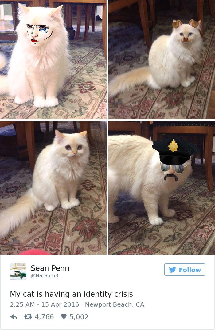 cats-twitter-memes-2016-33