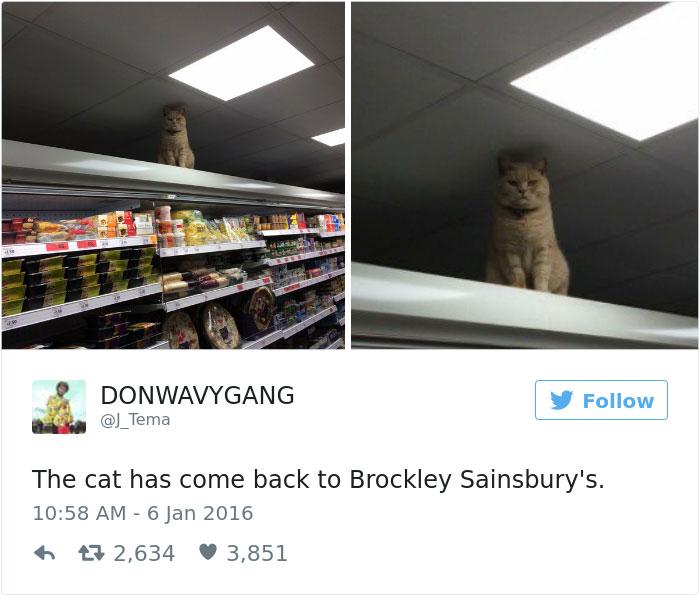 cats-twitter-memes-2016-34