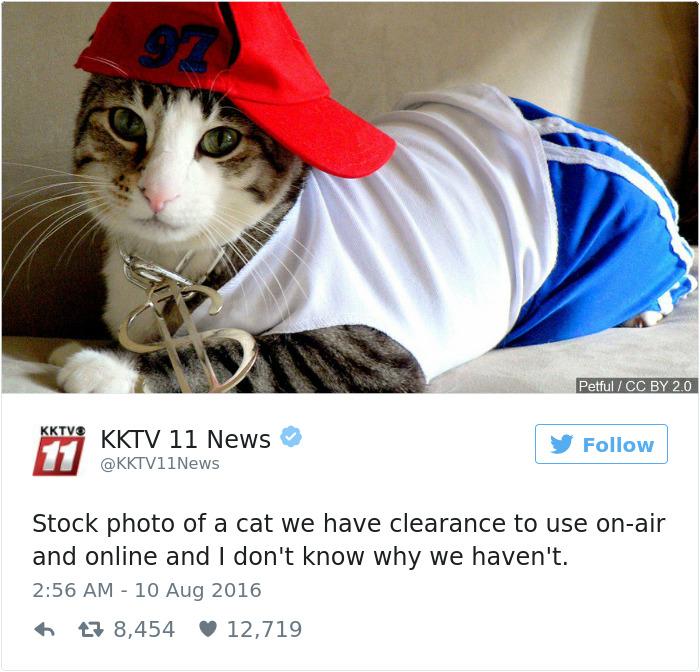 cats-twitter-memes-2016-35