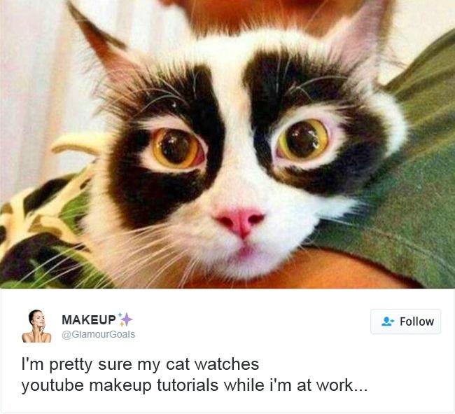 cats-twitter-memes-2016-8