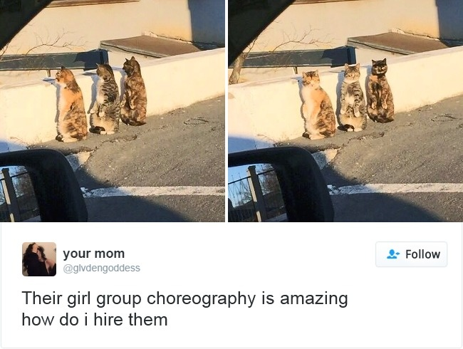 cats-twitter-memes-2016-9