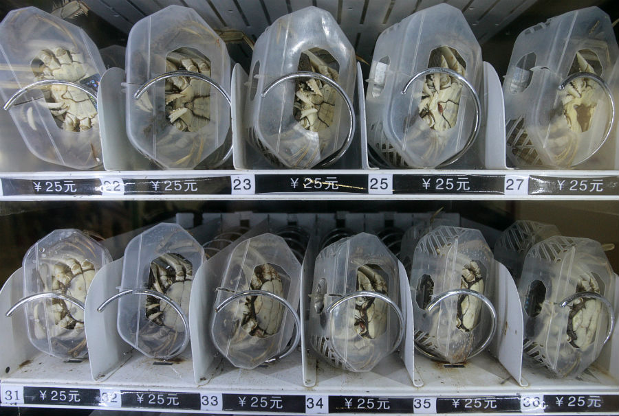 things-you-can-buy-in-china-5-vending-machine-crabs