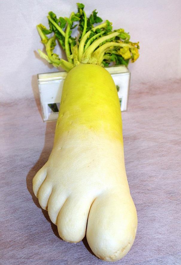 Yuk Simak   8 Bentuk Sayuran Paling Aneh ini Gaess  - edanTV simak,bentuk,sayuran,paling,aneh,gaess