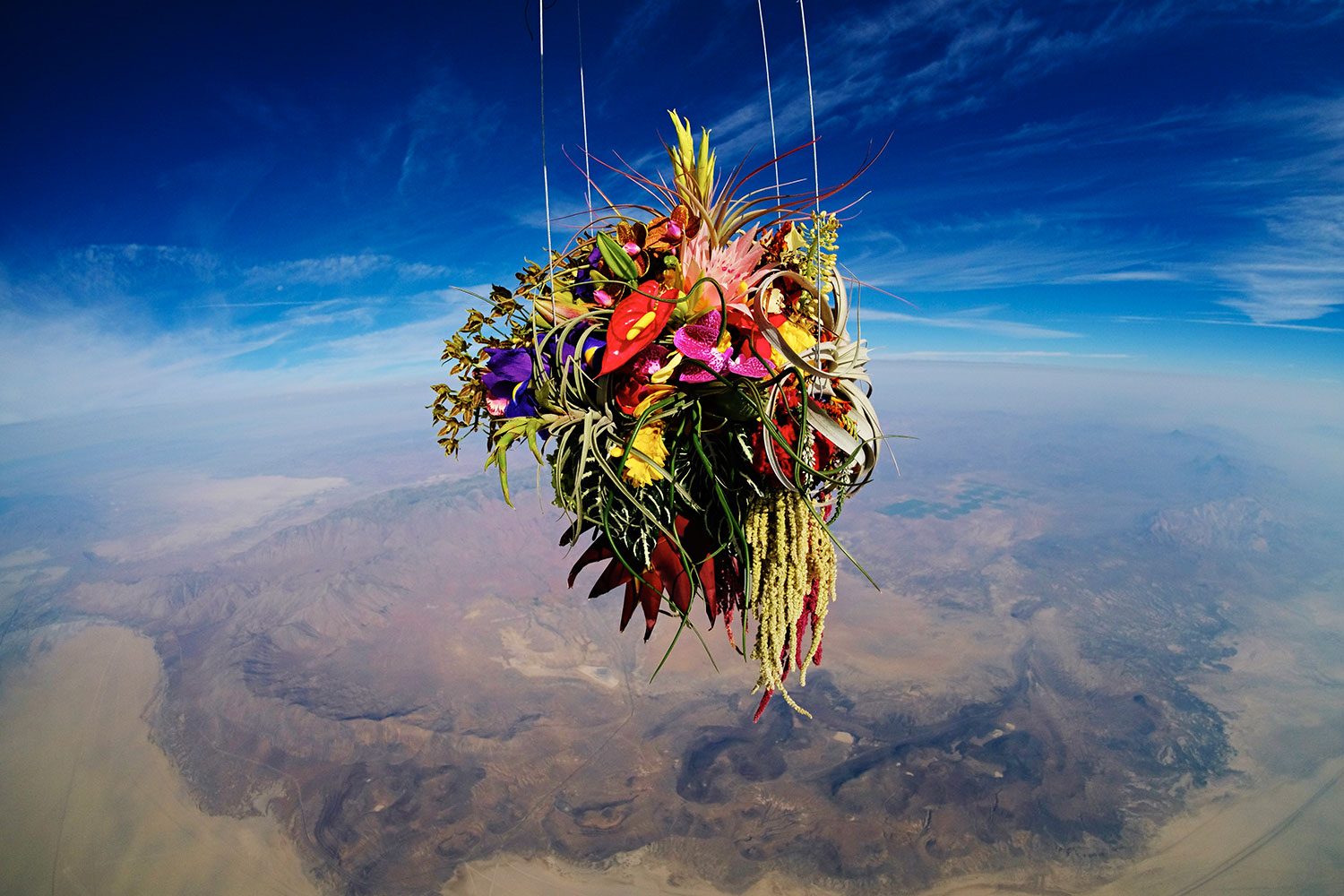 Exobiotanica – Botanical Space Flight
