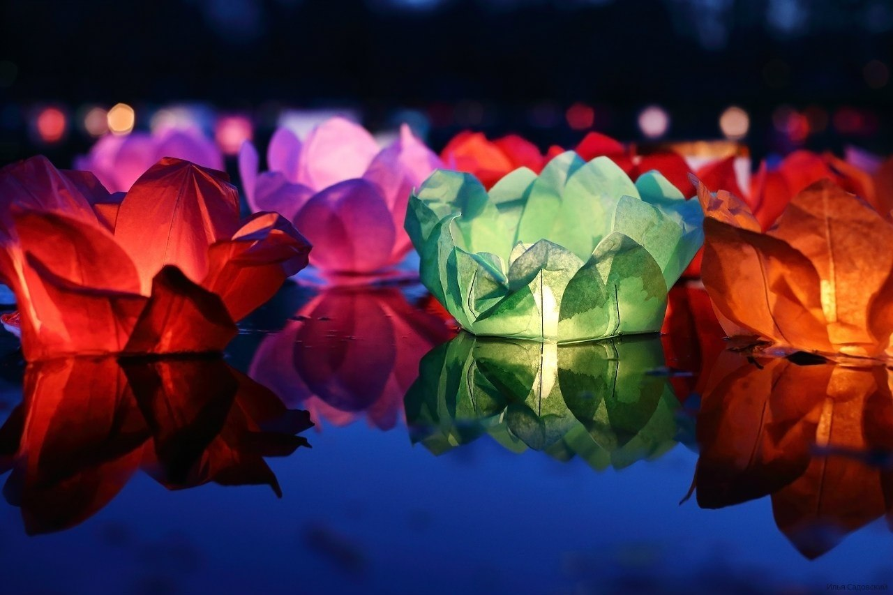Discovering Korea Lotus Lantern Festival In Seoul Brain