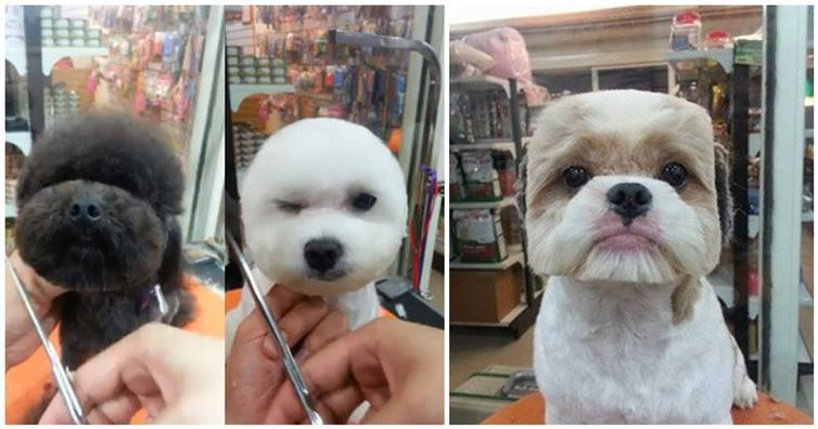 Round and Square dog hairstyles 1