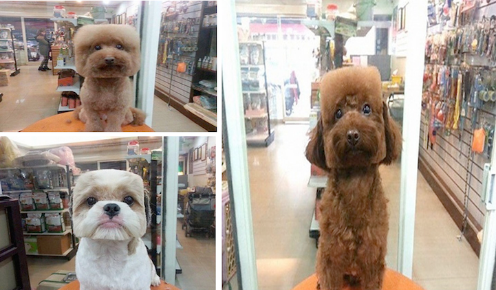 Round and Square dog hairstyles 4