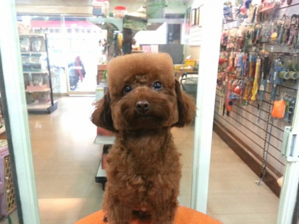 Round and Square dog hairstyles 5