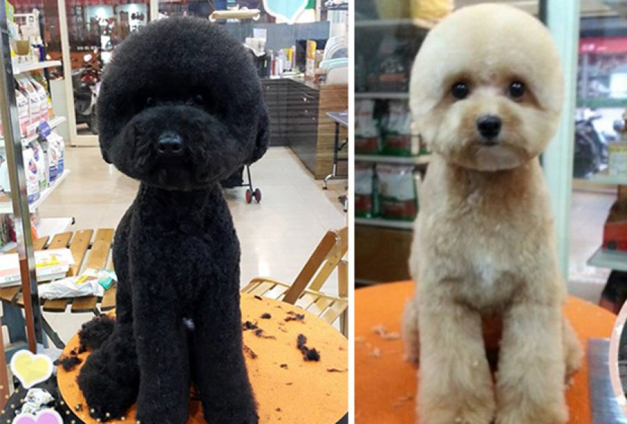 Round and Square dog hairstyles 6