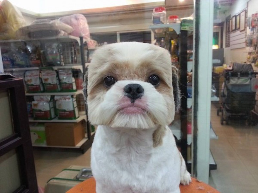 Round and Square dog hairstyles 8