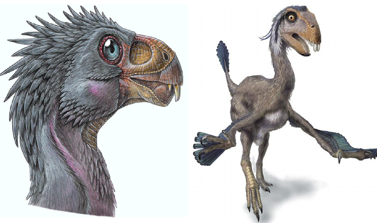 12 Obscure Dinosaurs You've Never Heard Of Brain Berries